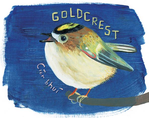 Goldcrest1-web